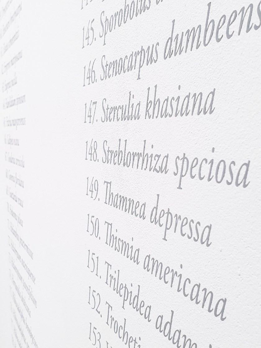 gabinete-de-dibujos-ernesto-casero-las-plantas-perdidas-13