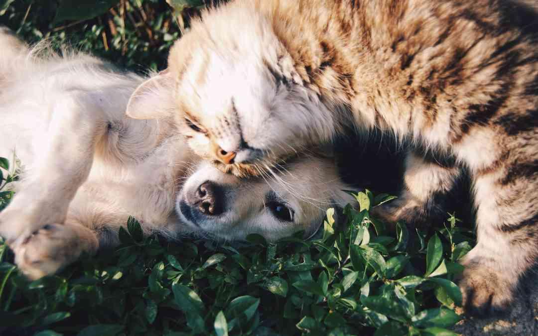 貓狗愛不愛你?他們的腦袋在想什麼?
