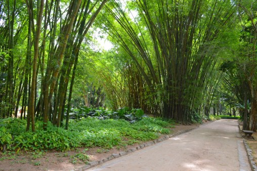 Jardin-Botanica-Dyandra-Raye-Brazil-Rio