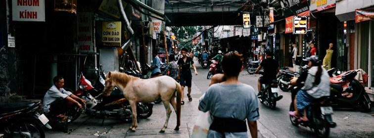 Hanoi, Vietnam - Horse