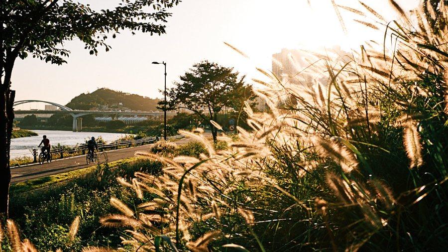Jungnangcheon Grass