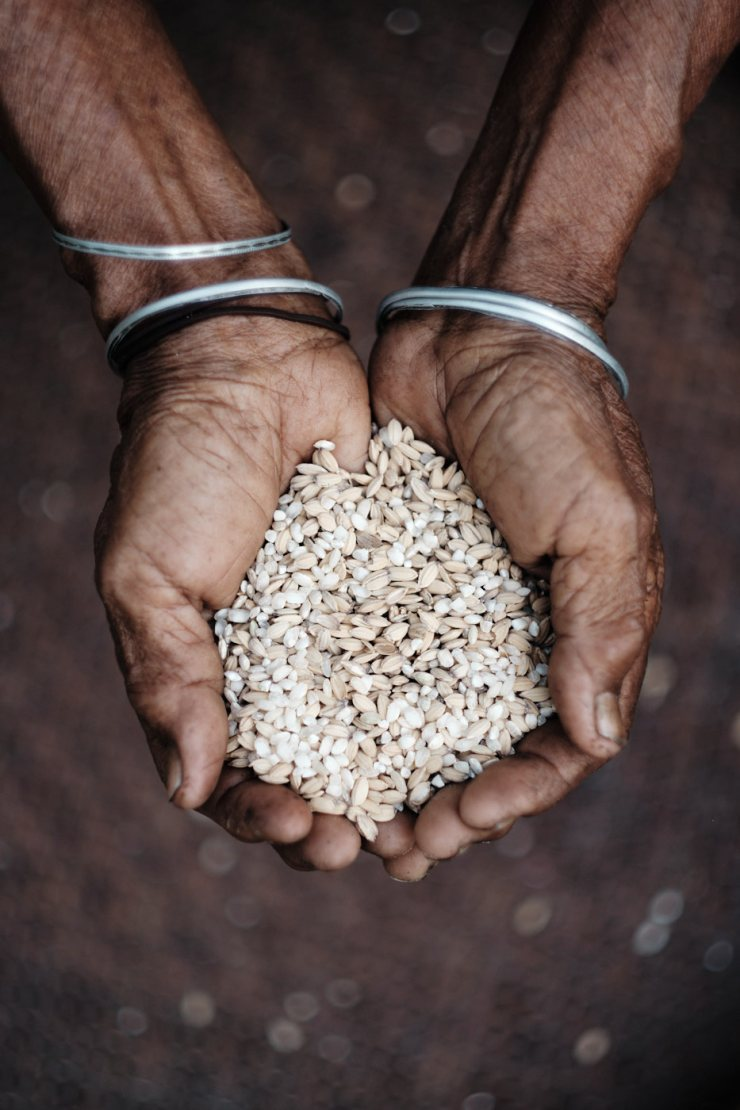 Hands Holding Rice, Myanmar