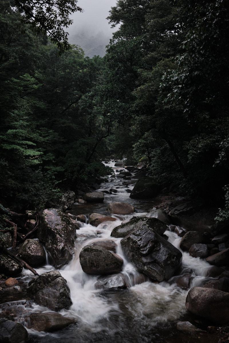 Gayasan National Park Stream