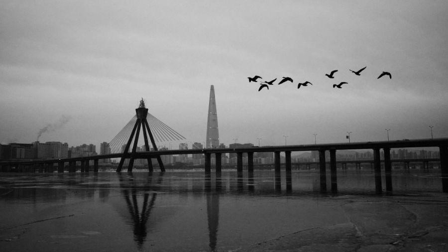 Birds and Olympic Bridge