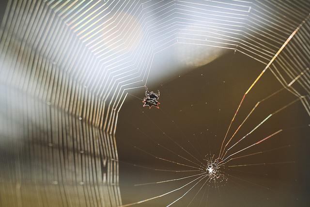 Spider Building Web