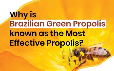 Why Brazilian Green Propolis known as the Most Effective Propolis?