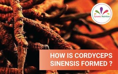 How is Cordyceps Sinensis formed?
