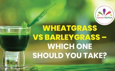 Wheatgrass vs Barleygrass – Which One Should You Take?