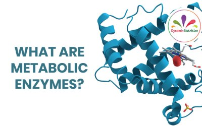 What Are Metabolic Enzymes?