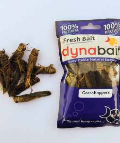 fishing bait you need to try