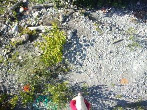 """Anaïs réalise un """"quadra de végétation"""" qui participe au suivi de l'évolution de la végétation sur le banc de l'Isère"""