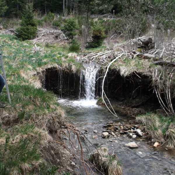 RIAILLES - Restauration : vue d'un élément de la zone humide