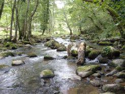 Vue sur la rivière Selves