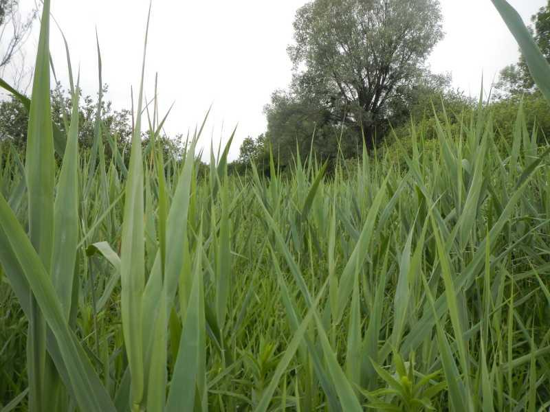 TATTES - Hydrologie : vue de l'intérieur du marais avec un végétation abondante