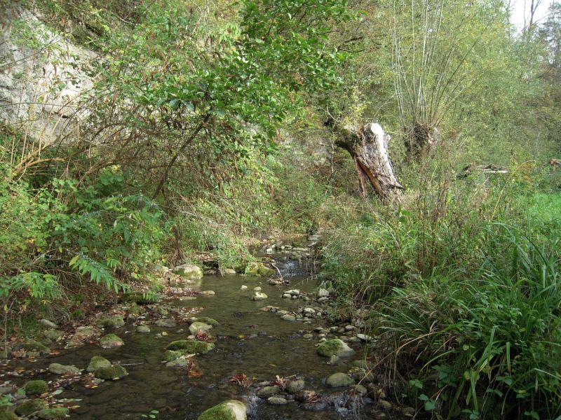 Fiches actions : vue de la rivière Usses