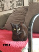 Vesla