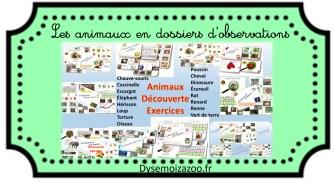 découverte-animaux-dossier-chauve-écureuil