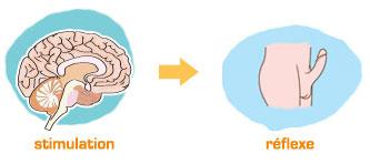 Astuces naturelles pour retarder son éjaculation Contrôle du cerveau