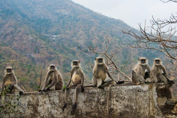 Monkey around Ranakpur Jain Temple