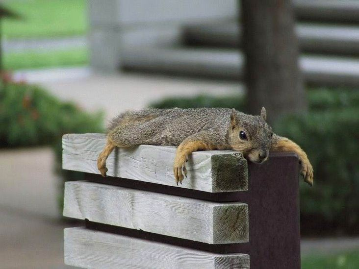 Incredibly cute squirrel