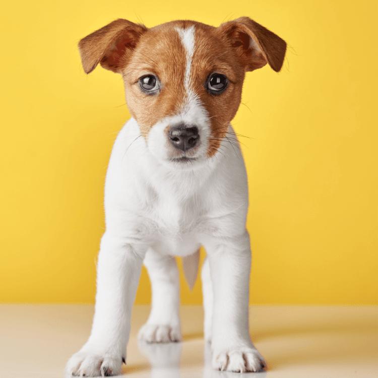 Puppypower pakket