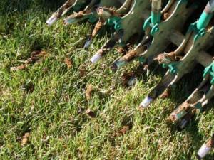 aeration over-seeding