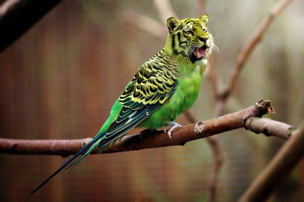 Perruche verte avec une tête de tigre. Pour métaphoriser la manipulation de la réalité.