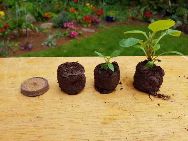 e-pots coco coir plant pellets 36mm