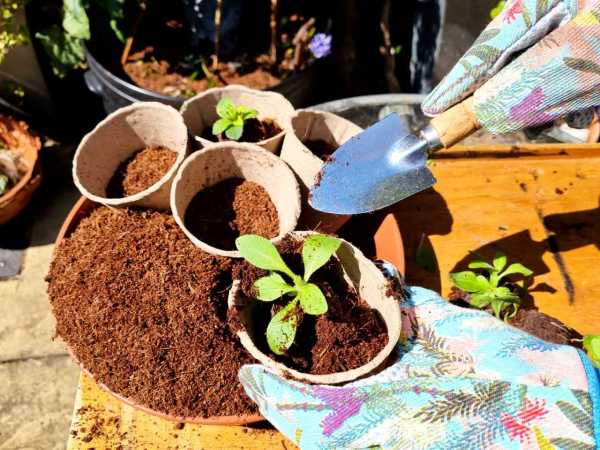 Tool set in use filling pots with coco coir