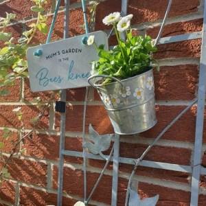 daisy planter small