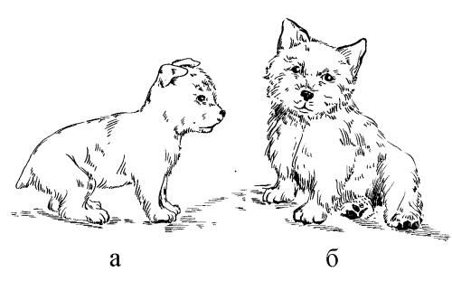 Ветеринарный справочник для владельцев собак