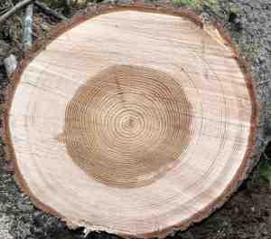 Твърдо дърво