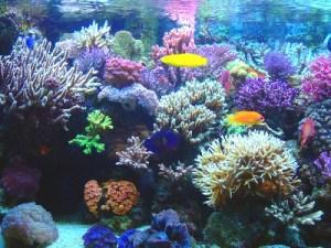http://xurl.es/CoralBelice