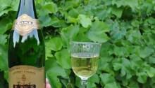 Sweet bubbles in sleek bottles