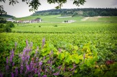 The Côte Chalonnaise is one of the most beautiful wine-growing regions of Burgundy