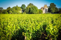 In France, particularly Burgundy, there is the belief that the role of winemaker is to bring out the expression of a wine's terroir