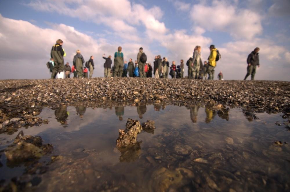 Oyster Safari