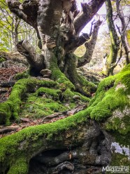 The Basque woods tell a tale of a forgotten yore