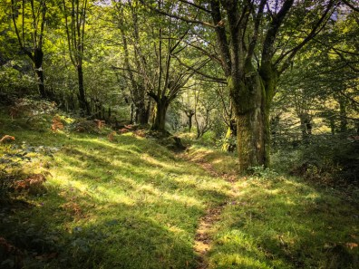 The Basque woods DO feel mysterious and full of ancient widsom