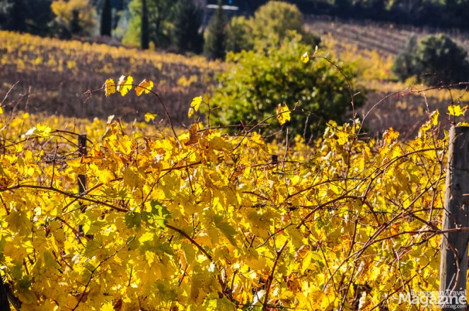 No wonder, they make some of the world's best wine: they've been at it since the 15th century