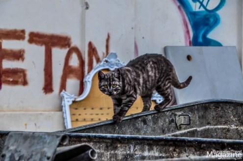Stray cat scavenging the dumpsters at Ballarò Street Market