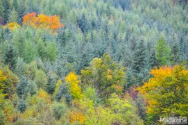 The forest clad in autumn colours
