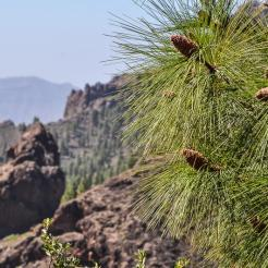 The hike to Roque Nublo is that kind of hike.
