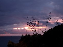 These beautiful Agave americanas always form such stunning silhouettes, especially against a violet sky