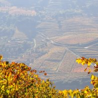 There are many national parks at and around the Douro river
