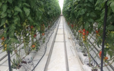 Unicamp volta a oferecer curso de extensão em Hidroponia e Cultivo sem Solo
