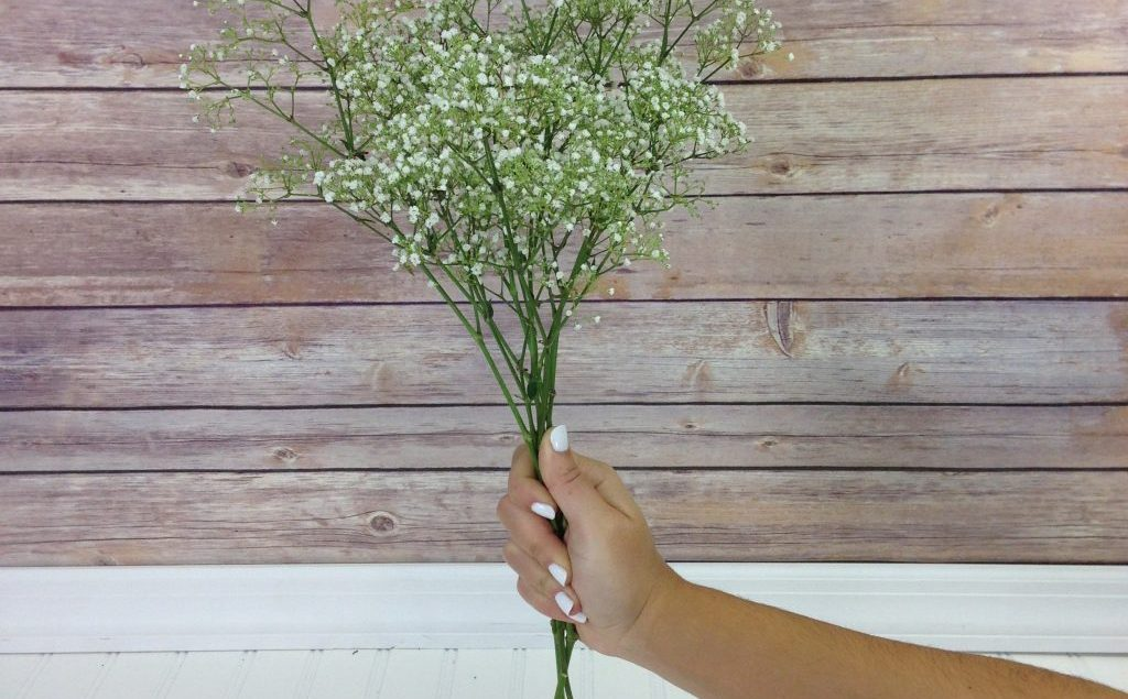 Here Is What You Need To Know About Gypsophila Flowers Baby S Breath Its Not What You Think Eagle Link Flowers