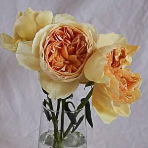 Wabara Garden Roses (Japanesse Varieties)
