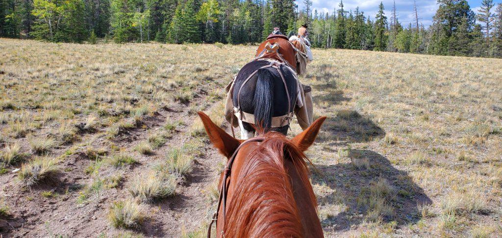 Colorado Elk Guides