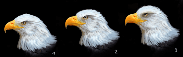 eagle pictures awi kopf
